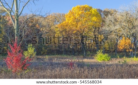 A small red autumn colored shrub highlights the autumn landscape at Oldfield Oaks Forest Preserve, DuPage County, Illinois