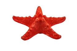 A small red starfish on a white background. Close up. Isolate on a white background.
