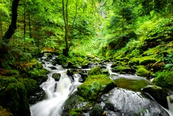 A small river deep in the forests of Germany