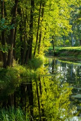 A small river in a mixed coniferous forest. Mossy trees close-up. Reflections on the water. Sun rays through the tree trunks. Latvia