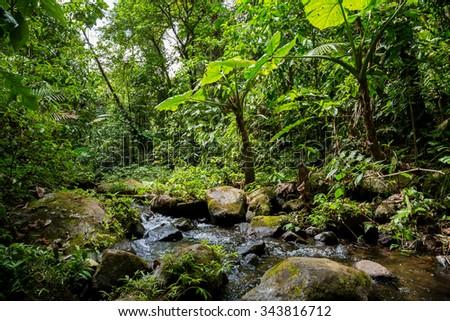 a small river in the green dense jungle in Costa Rica