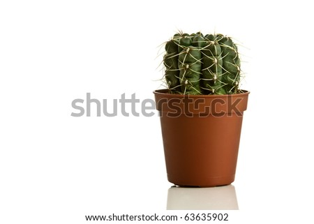A small round cactus in a pot isolated on a white background