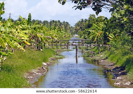 A small shallow irrigation canal running through a banana plantation in the rural area of Kuala Selangor, Malaysia.