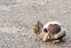 A small sick kitten sitting on the road. A little homeless kitten is starving and sick abandoned alone in the street.