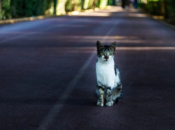 A small sick kitten sitting on the road. Such cats in large numbers live on the Mediterranean coast in tourist Antalya.