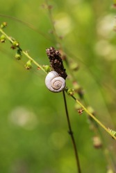 A small snail shell is on a blade of grass in a meadow.
