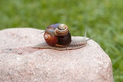 A small snail sits on a large snail that crawls on a big red stone.