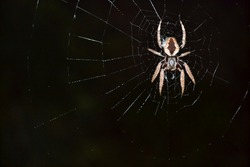 A small spider sitting in its web at night