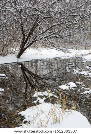 A small stream flows through a snowy winter landscape at Oldfield Oaks Forest Preserve, DuPage County, Illinois.