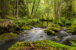 A small stream in the green forest, Västra Götaland, Sweden.