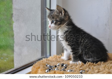 A small striped cat sitting on the windowsill and looked out the window.