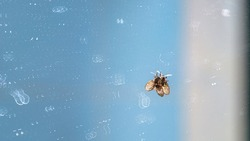 A small toilet fly perches on a dirty glass mirror covered in abstract stains from dried water. Abstract background.