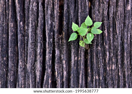 a small tree grew from the crack of ghe log Imagine de stoc ©