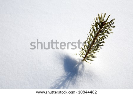 A small tree surviving in the snow