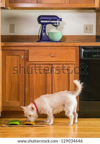 A small white dog eating his dinner out of a bowl in the kitchen