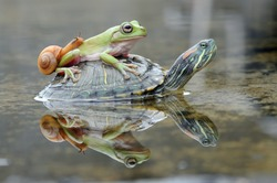 a snail and frog on a turtle