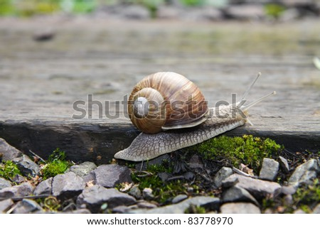 A snail crawling on stones
