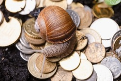 A snail crawling over small coins, a symbol of slowly upcoming inflation.