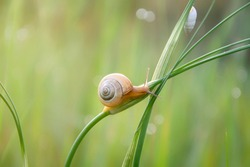 A snail crawling up the stalk of a plant. The sun shines brightly in the spring morning.