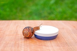 A snail crawls on a jar of face cream on a wooden surface against a background of green grass. Skin care concept.