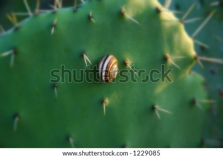 a snail hides in her shell protected in the cactus fields