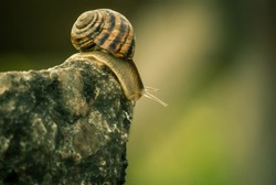 A snail is on a stone. July 2017, macro shooting, Koktebel, Crimea