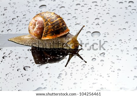 A snail on a glass surface with water drops