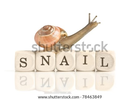 """A snail on the wood blocks with word """"snail"""" for letter S - stock photo"""