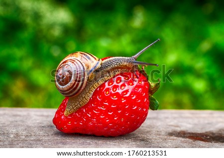 Photo of  A snail slowly eating delicious strawberries and cherries