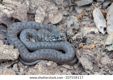 a snake on the ground