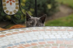 a sneaky cat raising his head from below a table