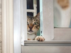 A sneaky young cat climbs and peeks though a slightly open window while one paw grasps the window sill.