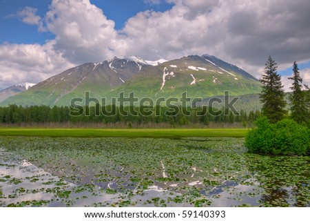 A snow-capped mountain reflecting off a lush green lilly pad covered pond on the Kenai Peninsula, Alaska.