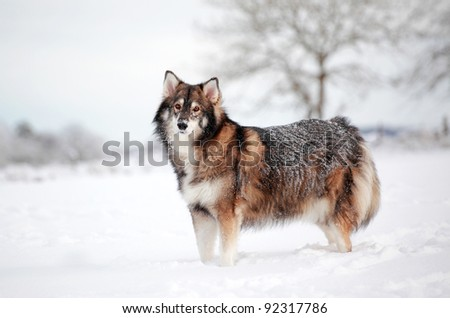 A snow covered dog standing in snow