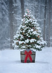 A snow covered natural spruce Christmas tree with illuminated colorful lights outdoors in an old aged wine barrel during a snowfall in the forest. Winter season.