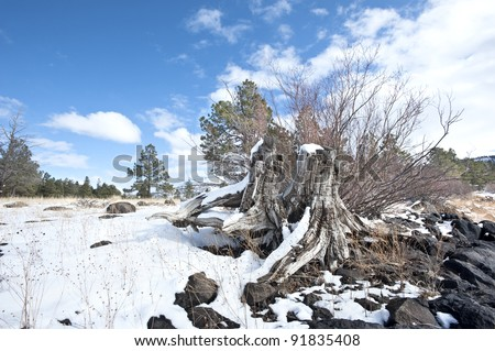 A snow covered tree stump in the high desert wilderness