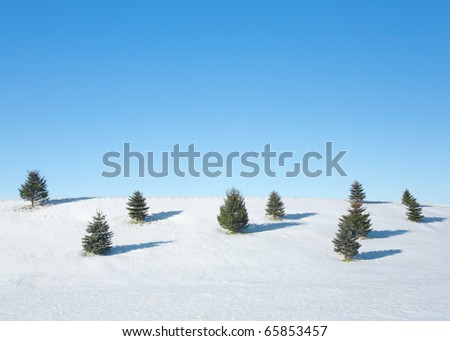 A snowy hillside with small evergreen trees and a clear blue sky.
