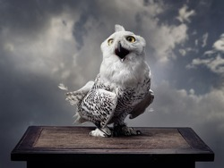 A snowy owl opened its mouth and looks forward. Background - grey clouds.