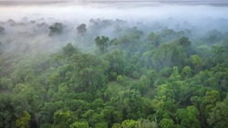 A soft focus, aerial view of a forest on a misty morning, shot from a hot air balloon in the Maasai Mara of Kenya.