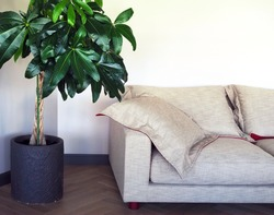 A soft sofa and a large home plant with large green leaves on a white wall background.