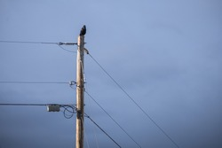 A solo crow or raven sits perched atop a telephone power pole with the sky and clouds in the background.