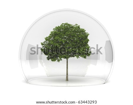 A sorbus tree growing under a glass dome in safety.
