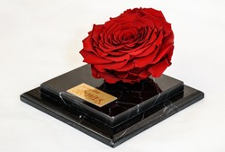 a sorcerous red rose on the black marble platform as an exclusive eternal present for the mother's day