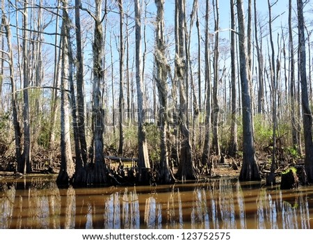 A South Louisiana Cypress Swamp