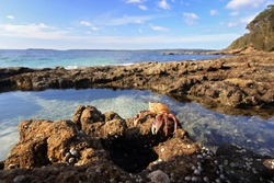 A sparkling bath of beauty with shell encrusted walls is the sea rockpool and what lies within a small enchanted world of crabs and fish and other crustaceans basquing in tranquility.