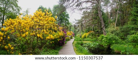 A special pic -Lovely park-wooden path surrounded by enormous clusters of multicoloured rhododendrons (mainly bright yellow In this view ) gives this picture a magical Wonderland appearance