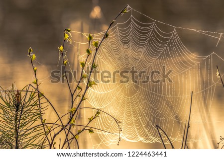 A spectacular sunrise on a river with a spider web on which the focus is placed.