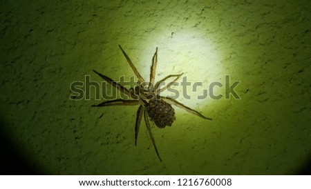 A spider and her offspring on her body #1216760008