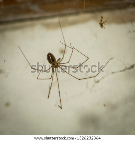 Stock Photo A spider feeding, along with a victim trapped in its network.