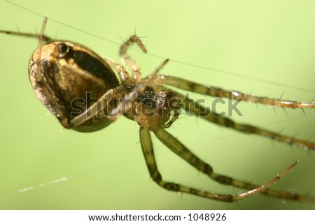 A spider hangs from a net.